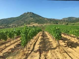 Foto - Terreno agricolo in Vendita a Monti