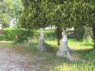 Casa indipendente Vendita Santa Lucia di Piave