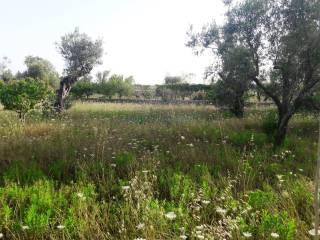 Foto - Terreno agricolo in Vendita a Salve