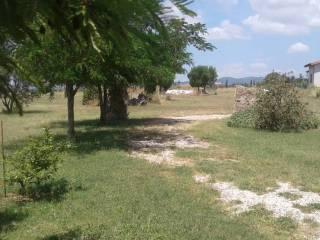 Foto - Villa unifamiliare Strada Provinciale Riminino, Canino