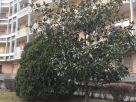 Appartamento Affitto Moncalieri