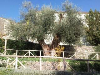 Foto - Rustico, da ristrutturare, 80 mq, Roccalbegna
