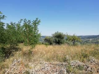 Foto - Terreno agricolo in Vendita a Mirabello Sannitico