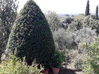 Villetta a schiera Vendita Castelfranco Piandisco