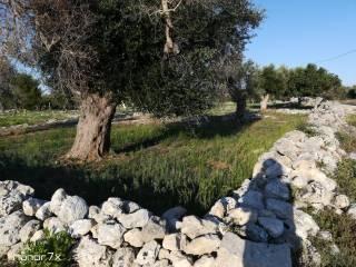 Foto - Terreno agricolo in Vendita a Lizzanello