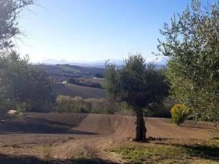 Foto - Terreno agricolo in Vendita a Montelupone