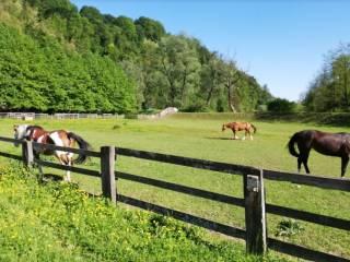 Photo - Dairy farm 80750 sq.m., Cucciago