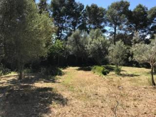 Foto - Terreno agricolo in Vendita a Tortolì