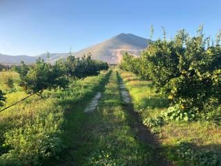 Photo - Farmhouse 10000 sq.m., Falciano del Massico