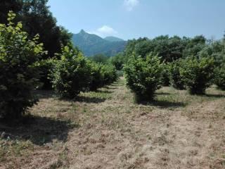 Foto - Terreno agricolo in Vendita a Cumiana