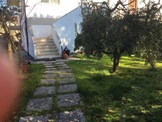 Foto - Appartamento buono stato, piano terra, Bientina