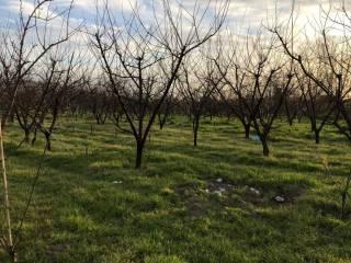 Terreno Vendita Giugliano in Campania