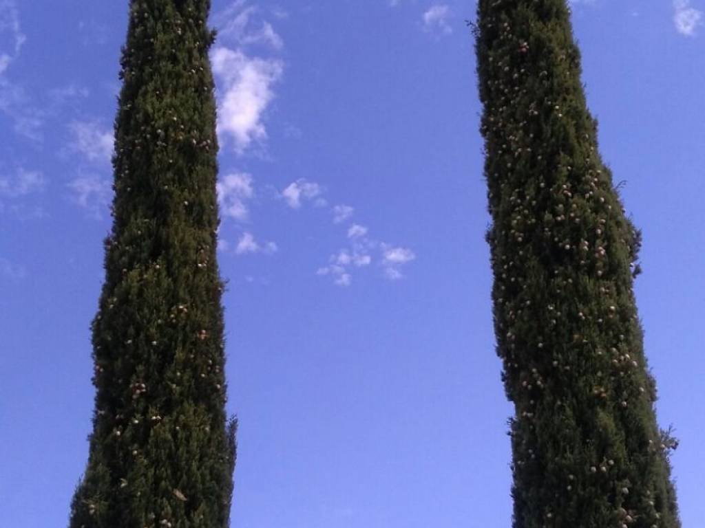 Cipressi - VENDESI CASALE IN PIETRA CON PISCINA IN MAREMMA