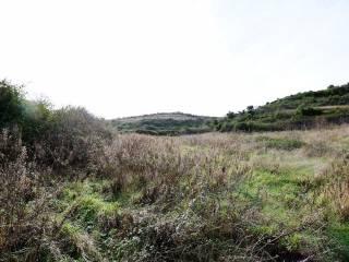 Foto - Terreno agricolo in Vendita a Ossi