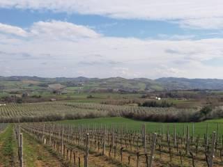 Foto - Terreno agricolo in Vendita a Meldola