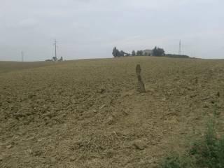 Foto - Terreno agricolo in Vendita a Petacciato