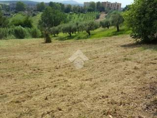 Foto - Terreno agricolo in Vendita a Monterotondo