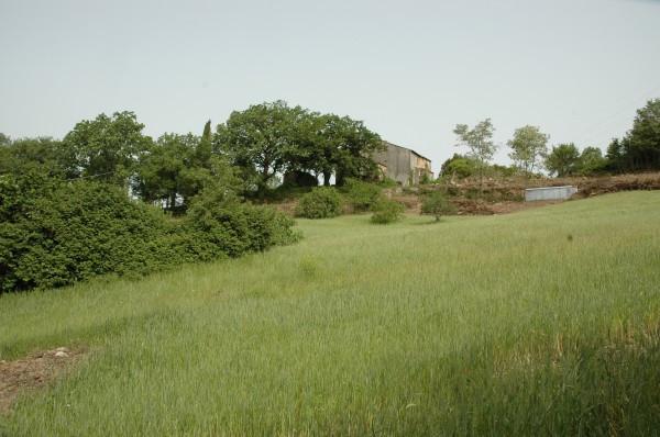 foto  Rustico / Casale in Vendita a Montieri