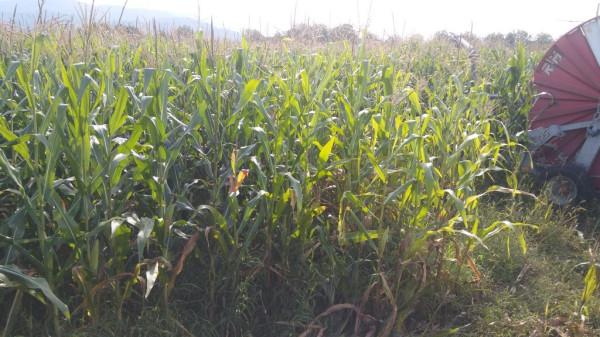 foto  Terreno agricolo in Vendita a Alife
