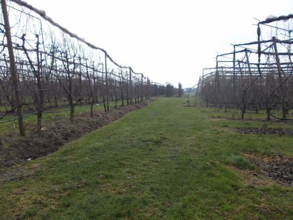 foto  Terreno agricolo in Vendita a Anzola dell'Emilia