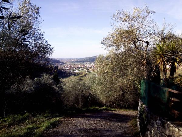 foto  Terreno agricolo in Vendita a Massarosa