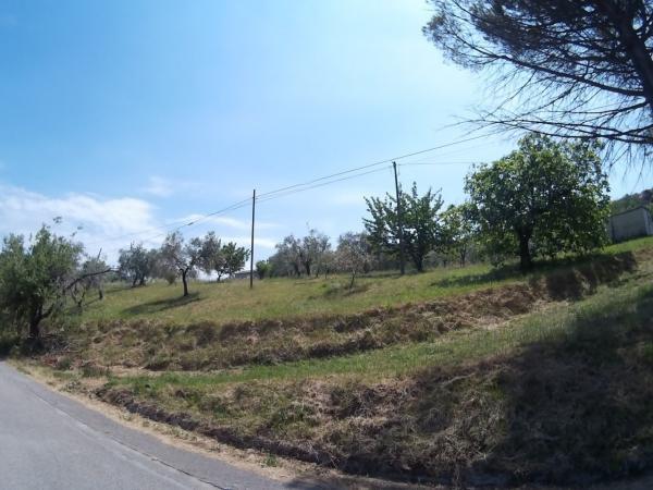 foto 1 Terreno agricolo in Vendita a Mompeo