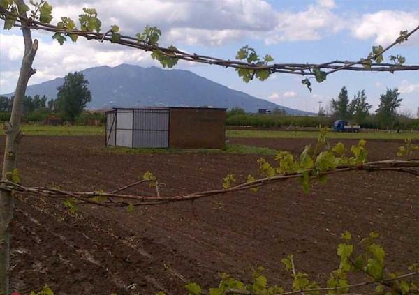 foto  Terreno agricolo in Vendita a Nola