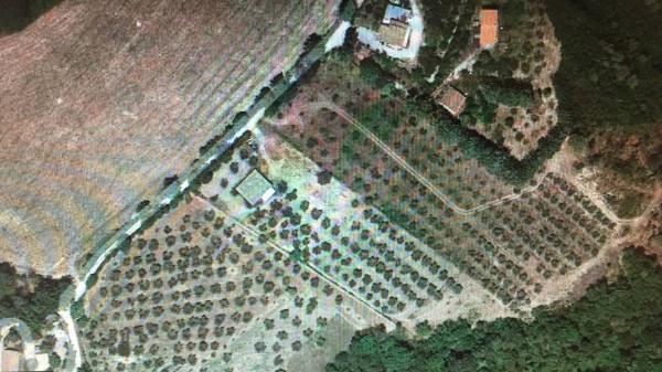foto  Terreno agricolo in Vendita a Torri in Sabina