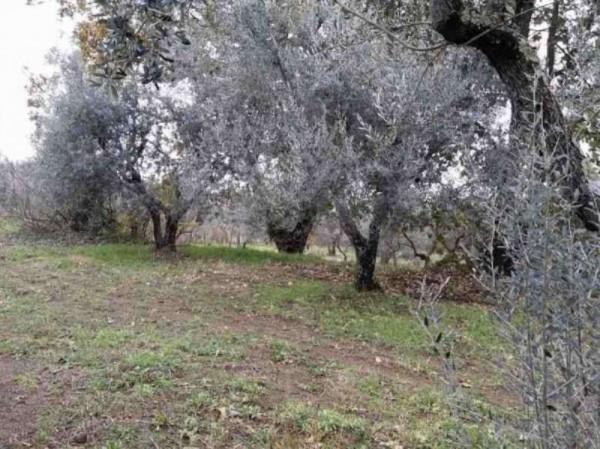 foto  Terreno agricolo in Vendita a Vetralla