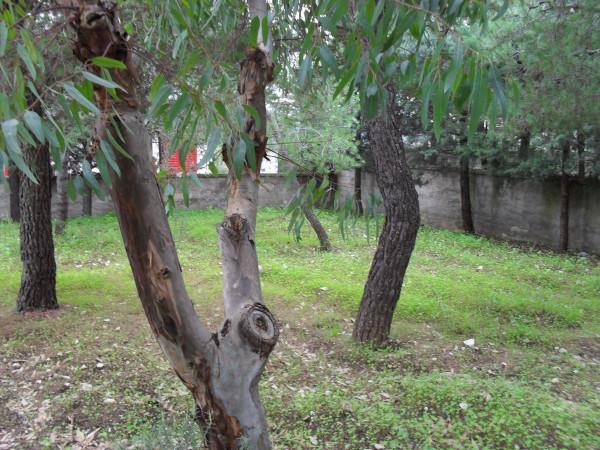 foto  Villa, buono stato, 70 mq, Bitonto