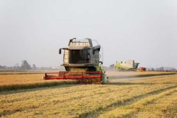 foto  Azienda agricola in Vendita a Vercelli