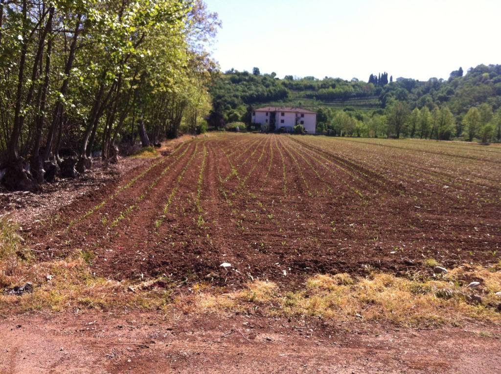 foto foto Terreno agricolo in Vendita a Rezzato
